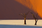 fotografie/landscapes/Namibia_obstinate_trees_t.jpg